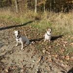 podzimní výlet na hrad Veveří - kopie