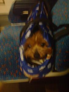Corrika v taske a ve vlaku
